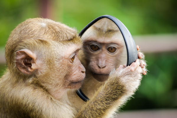 Monkey caloric restriction study